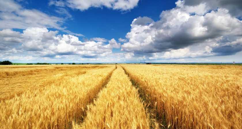 Как оформить земельный пай в собственность по наследству?