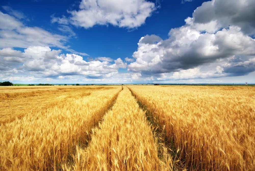 Как вступить в наследство земельного пая порядок действий и необходимые документы